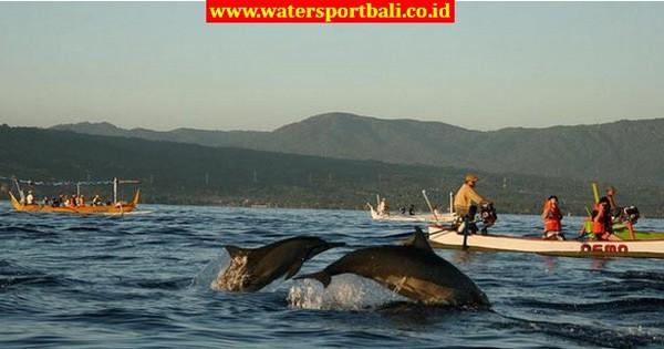 Inilah Harga Sewa Perahu Amp Tiket Dolphin Lovina Bali