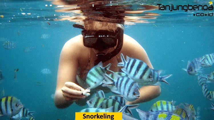 Snorkeling di Tanjung Benoa