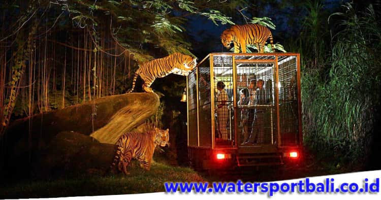 Night Safari Journey Trip